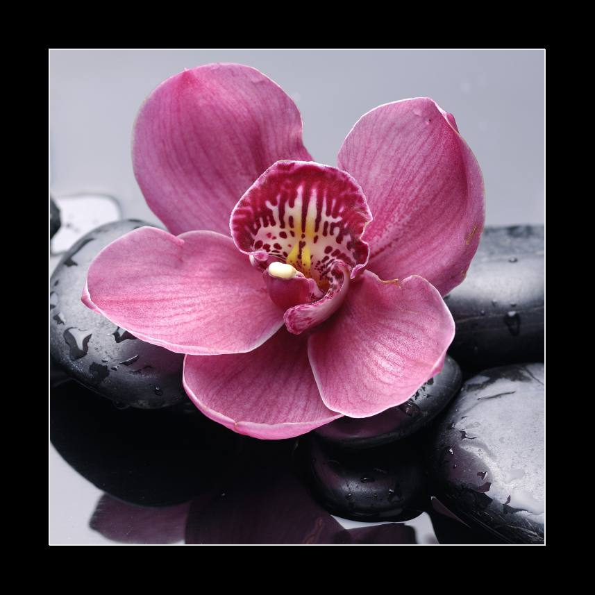 Macro of red orchid on stone with water drops
