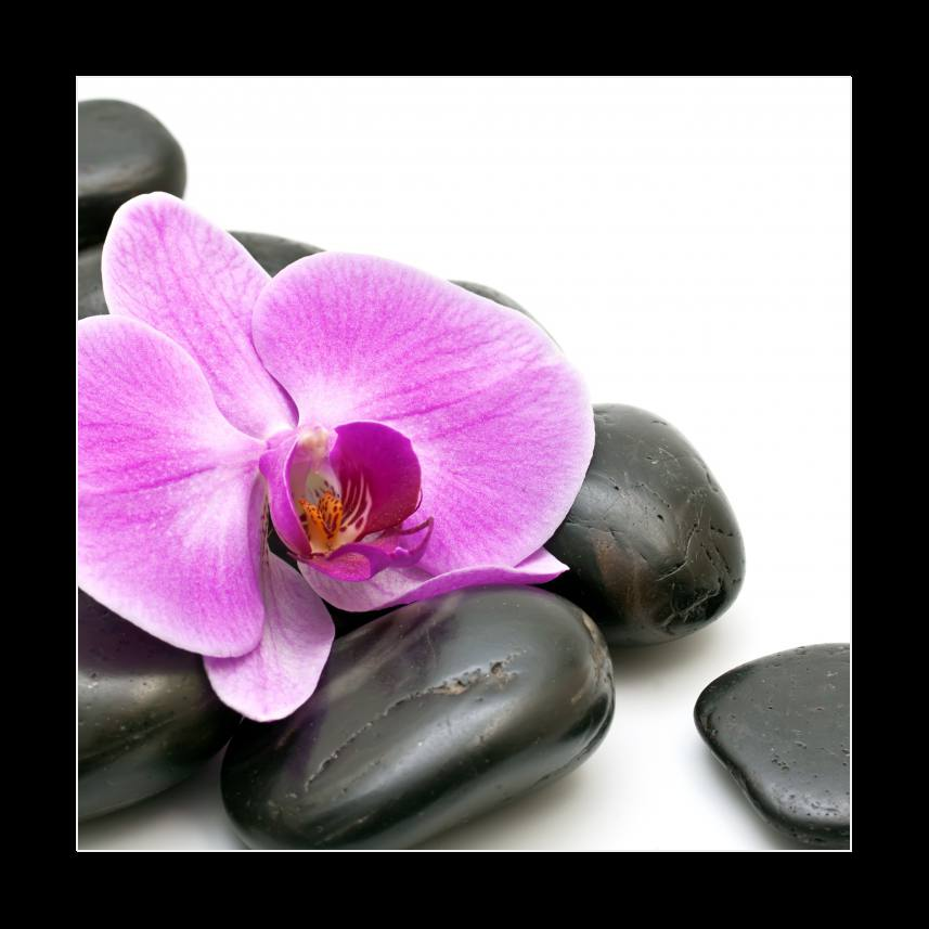 Pink orchid and zen Stones on a white background