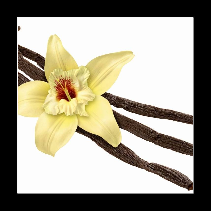 Vanilla Bean and Flower (clipping path)