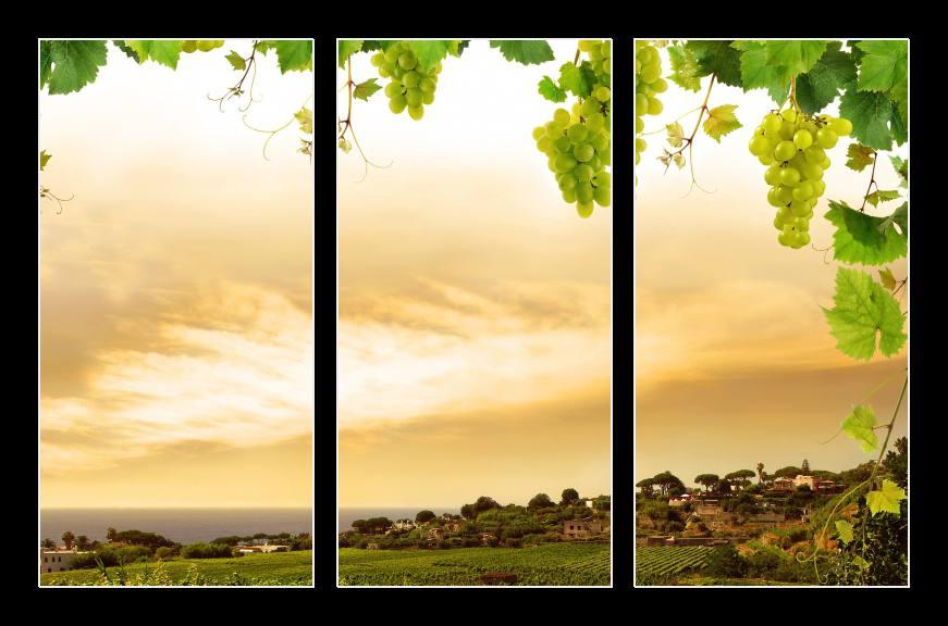fbb grapevine