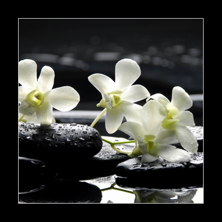 Zen stones and white orchids with reflection