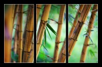Bamboo forest background (1/2)