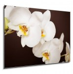 Beautiful orchid on brown background (2/2)