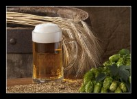 beer with barley and hops