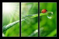 fresh morning dew and ladybird (1/2)