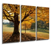 Golden Fall Foliage Autumn Yellow Maple Tree on golf course (2/2)