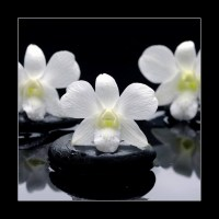 Spa Still life with beautiful white orchid on therapy stones