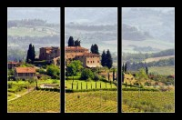 Tuscany vineyard 03 (1/2)