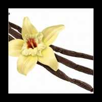 Vanilla Bean and Flower (clipping path) (1/2)