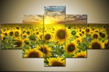 Obraz na stěnu slunečnice